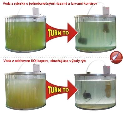 Porovnanie odchovne koi kaprov pred a po čistení vody ozónom