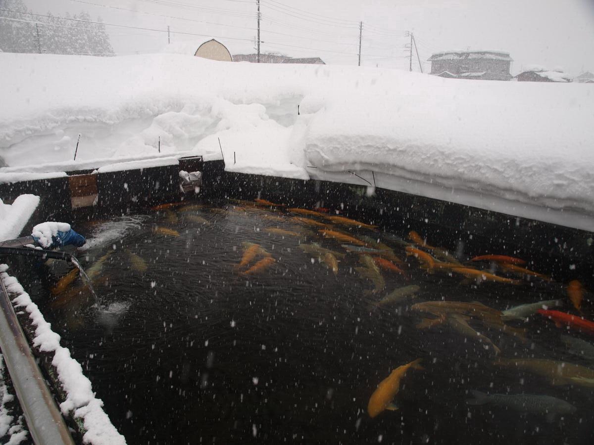 V zime môže v Niigate napadnúť až 4 metre snehu.