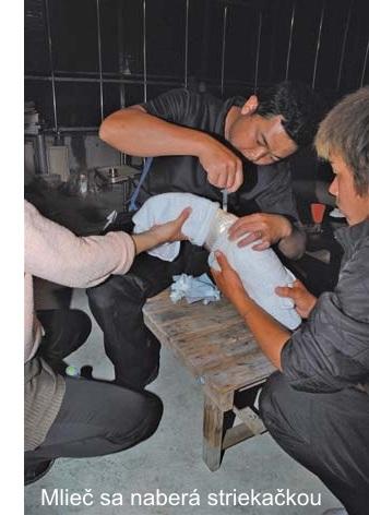 Naberanie mlieču KOI kapra striekačkou