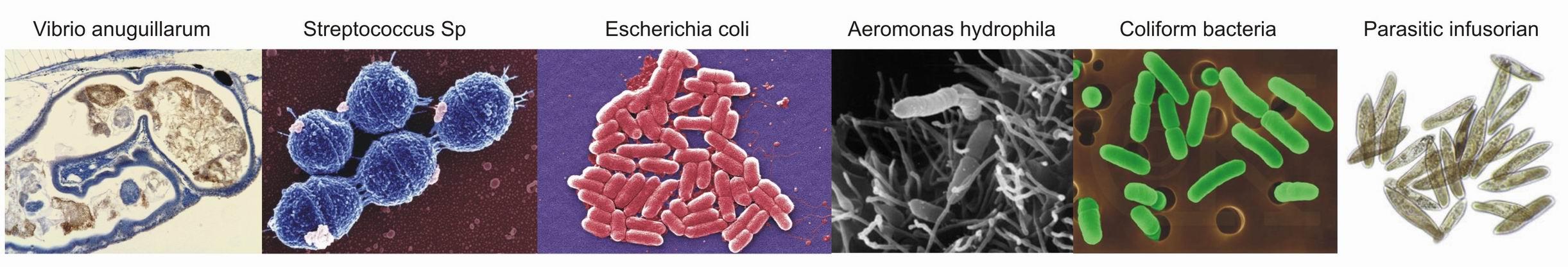 Baktérie v záhradných jazierkach