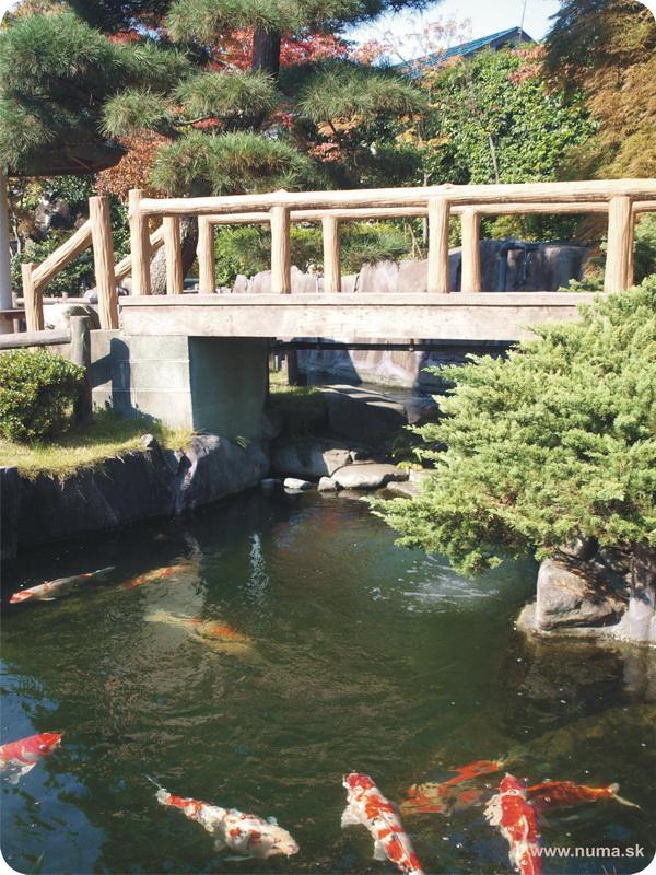 Japonská záhrada Nishikigoi no Sato.