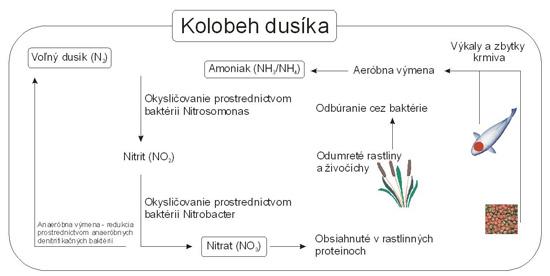Filtrácia jazierka a jej vplyv na kolobeh dusíka